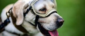 Portal 180 - Se jubiló Frida, la heroica perra rescatista de México