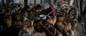 Portal 180 - Rezos budistas para calmar a los perros callejeros en Birmania