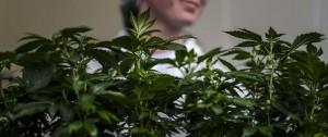 Portal 180 - Diputados aprobó ley de acceso al cannabis medicinal