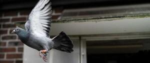 Portal 180 - Los mechones de pelo, culpables de las palomas lisiadas