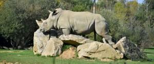 Portal 180 - Murió a los 55 años la decana de los rinocerontes blancos en cautividad