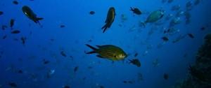 Portal 180 - La pérdida de oxígeno se suma a las amenazas para los océanos