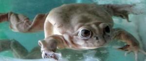 """Portal 180 - El """"FrogPhone"""", el teléfono que permite a científicos llamar a las ranas"""