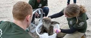 Portal 180 - Carrera contra el tiempo para salvar los animales en isla Canguro en Australia