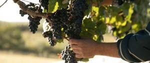 Portal 180 - Sacromonte lanza al mercado su vino de alta gama:  con entrega a domicilio