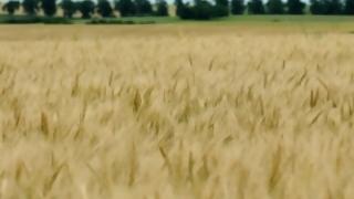 El hambre china de cereales hace explotar los precios en 2020 | 180