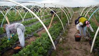 Empresarios rurales se retiran de los Consejos de Salarios | 180