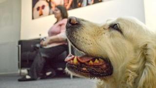 Florencia jubila a su perra guía, Salu | 180