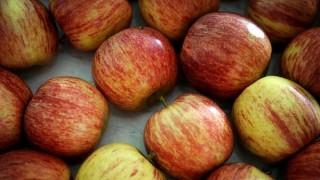 No hay que pelar la manzana: buen uso de agroquímicos no perjudica el consumo | 180