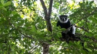 Los lémures y su selva amenazados por la caza furtiva en Madagascar | 180
