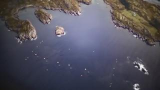 Un alga tóxica diezma criaderos de salmones en Noruega | 180