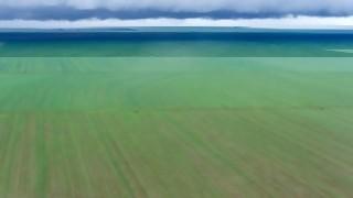 Brasil en camino a ser el campeón mundial de la soja | 180