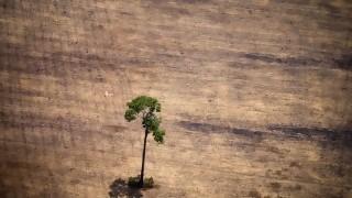 Brasil concentró en 2019 la mayor pérdida de bosques inexplotados | 180