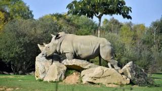 Murió a los 55 años la decana de los rinocerontes blancos en cautividad | 180