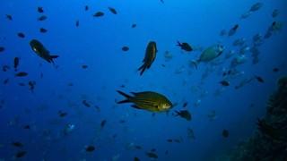 La pérdida de oxígeno se suma a las amenazas para los océanos | 180