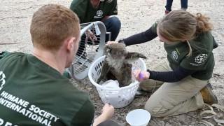 Carrera contra el tiempo para salvar los animales en isla Canguro en Australia | 180