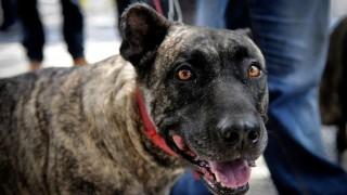 Nueva reglamentación sobre tenencia de perros con multas de hasta 10.000 pesos | 180