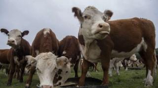 La ganadería uruguaya ante el desafío de ser más eficiente y con menor efecto invernadero | 180