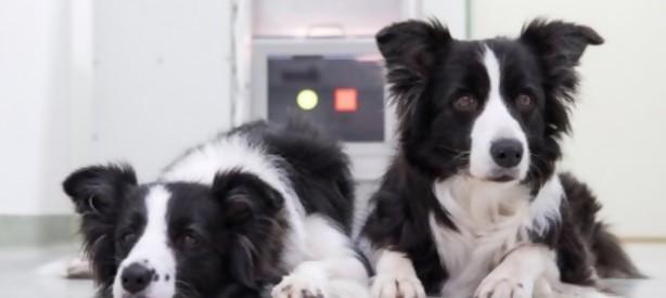 Portal 180 - Los videojuegos ayudan a los perros a mantenerse activos mentalmente