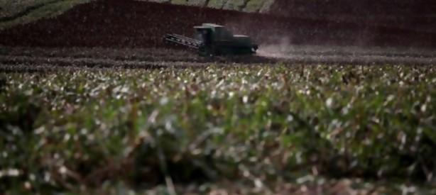 Portal 180 - Cosecha de soja escasa y con bajos precios