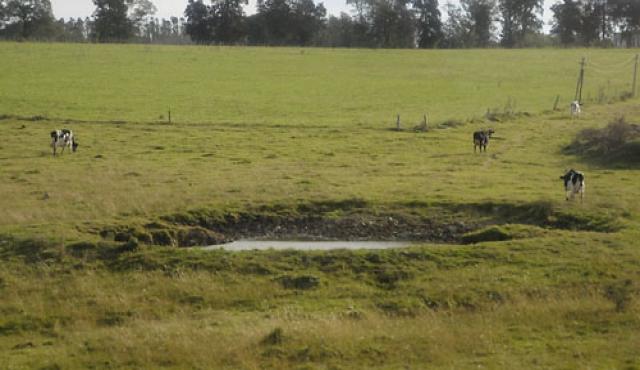 Emergencia agropecuaria en el este por falta de lluvias