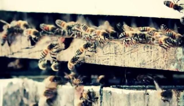 La difícil convivencia entre abejas, miel y glifosato