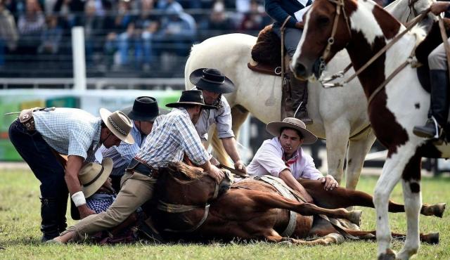 Murió un caballo en la Criolla y piden que se suspenda