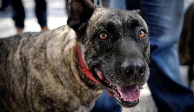Hay más de 1.700.000 perros en los hogares del país