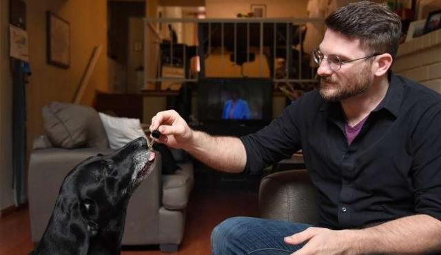 El mercado del cannabis en EEUU, ahora también para mascotas