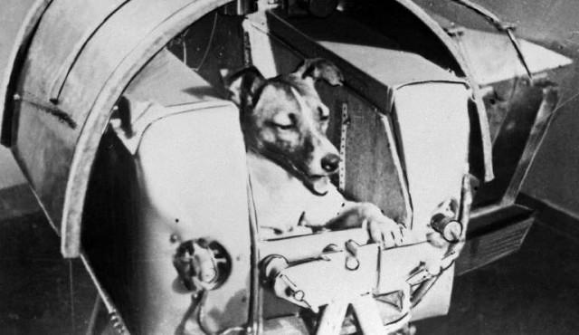 Hace 60 años la URSS enviaba al espacio a la perra Laika