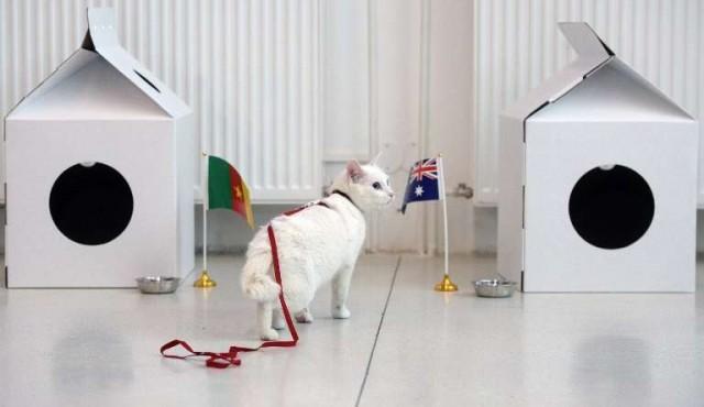 Aquiles, un gato blanco y sordo, será el pronosticador oficial del Mundial 2018