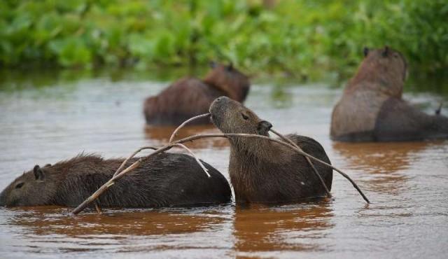 El Pantanal, un tesoro amenazado en el corazón de Sudamérica