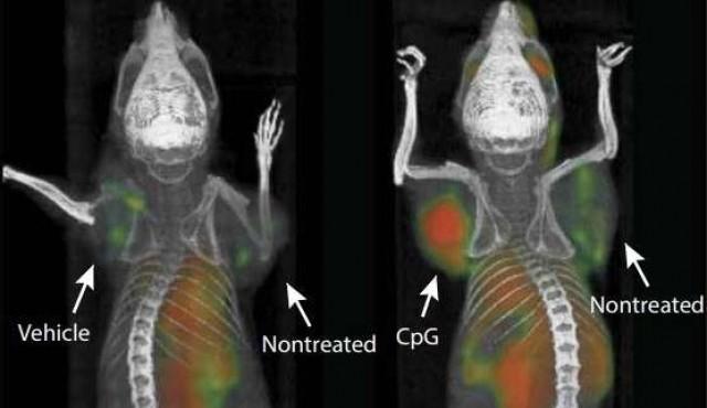 Experimento en cáncer ilusiona por innovación y resultados