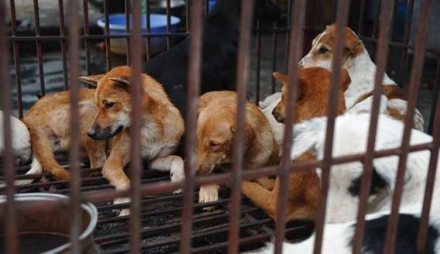 Hanói insta a sus habitantes a dejar de comer carne de perro