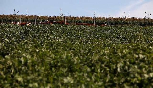 MGAP registró el primer controlador biológico del país para cultivos extensivos