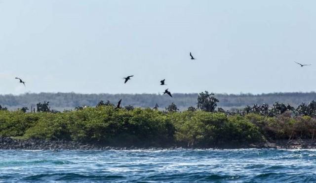 Casi 1.600 especies han sido introducidas en el frágil ecosistema de Galápagos