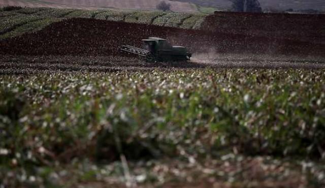 Avispas como alternativa al insecticida en la soja no transgénica