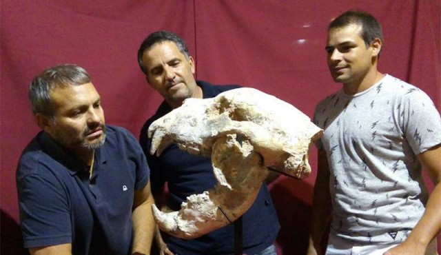 Hallan fósiles de un oso gigante que vivió hace 700 mil años en Argentina