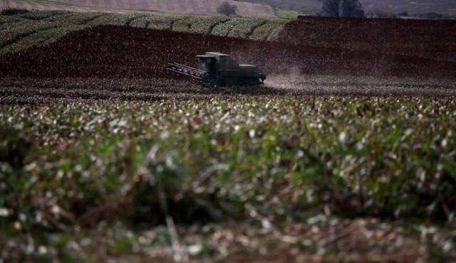 Carne y soja impulsan las exportaciones uruguayas
