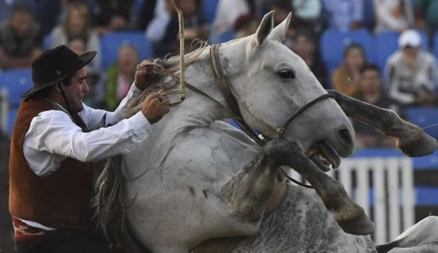 """Intendencia """"reformulará"""" las criollas """"sin violencia ni maltrato"""" a caballos"""