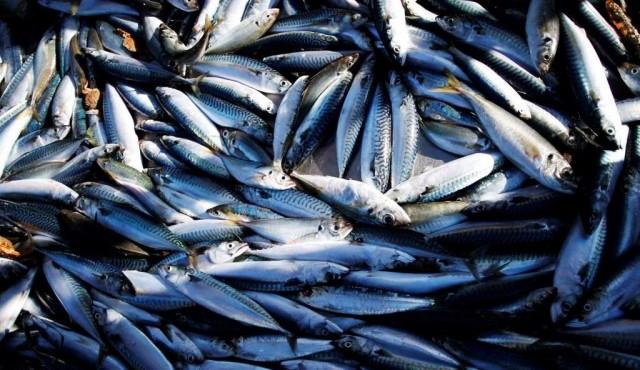 Investigadores siguen pendientes de una respuesta sobre el decreto de ley de pesca