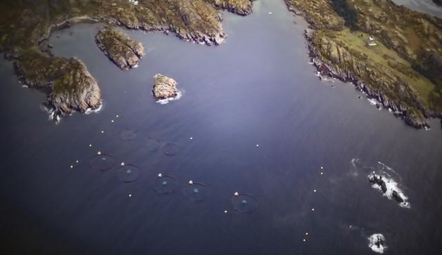 Un alga tóxica diezma criaderos de salmones en Noruega