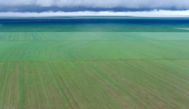 Brasil en camino a ser el campeón mundial de la soja