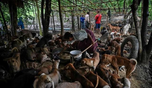 Rezos budistas para calmar a los perros callejeros en Birmania