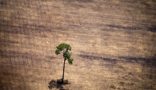 Brasil concentró en 2019 la mayor pérdida de bosques inexplotados