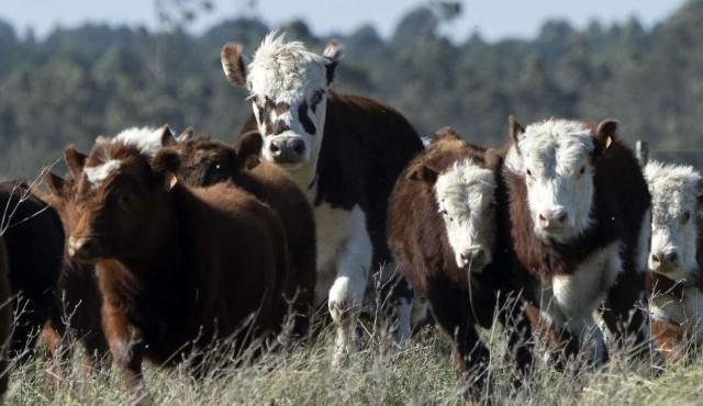 Pese a dudas iniciales, exportaciones de carne a China se mantienen