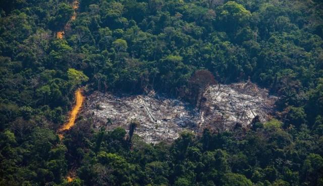 Deforestación de la Amazonía brasileña creció 91% de enero a agosto