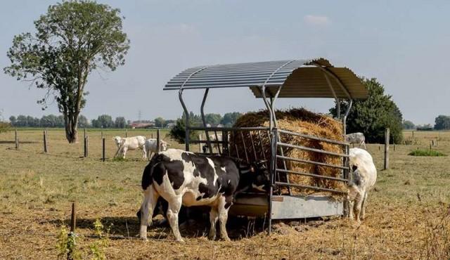 En Francia, vacas con baja emisión de carbono para ayudar al planeta