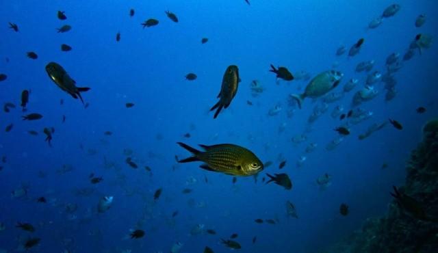 La pérdida de oxígeno se suma a las amenazas para los océanos