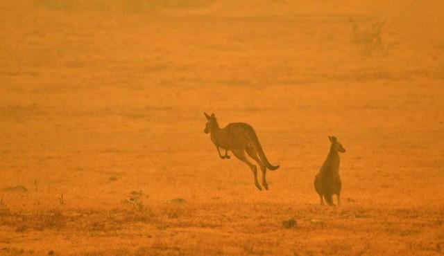 La lluvia alivia en los incendios de Australia pero se necesita más
